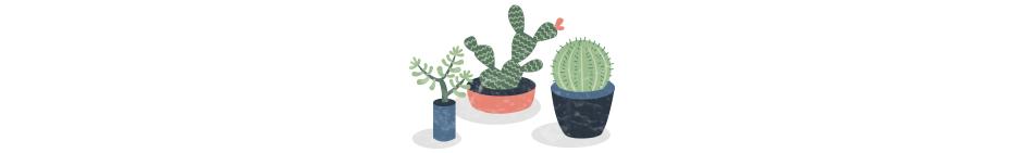 cactus-fin
