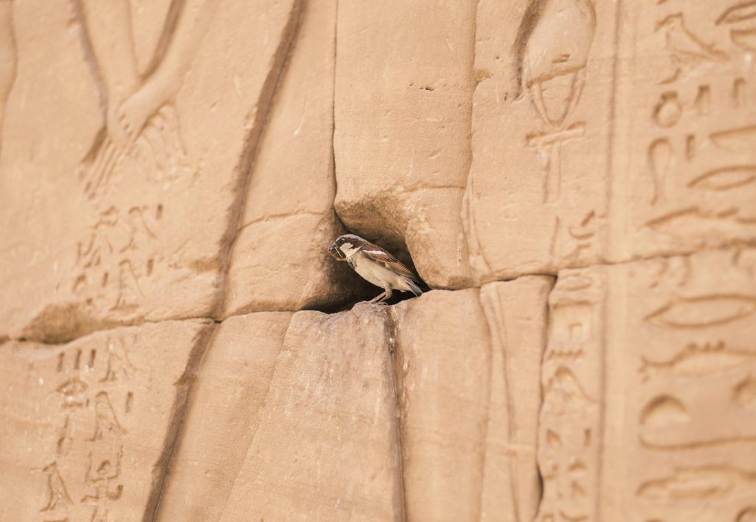 J3-Egypte16