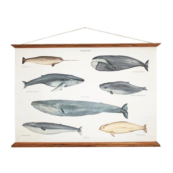 affiche-baleines