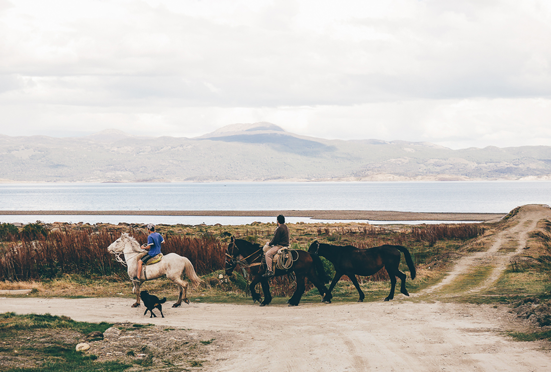 lechienataches-Ushuaia