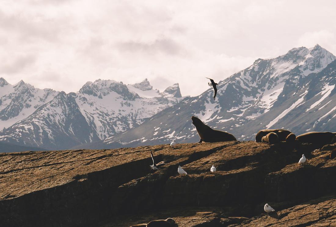lechienataches-UshuaiaCanalBeagle5b