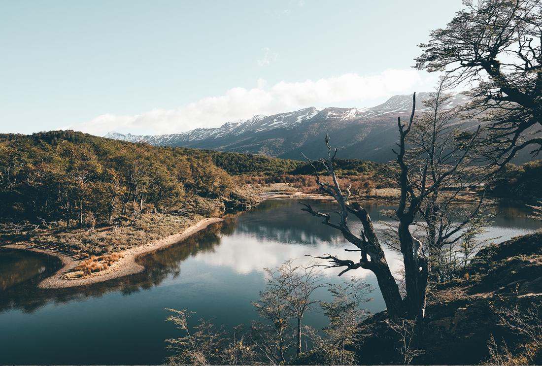 lechienataches-UshuaiaParcTerreFeu