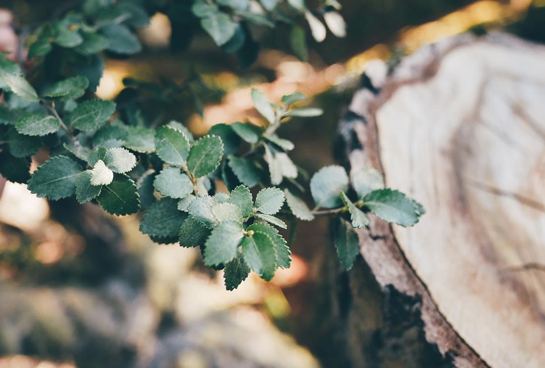 lechienataches-UshuaiaParcTerreFeu3