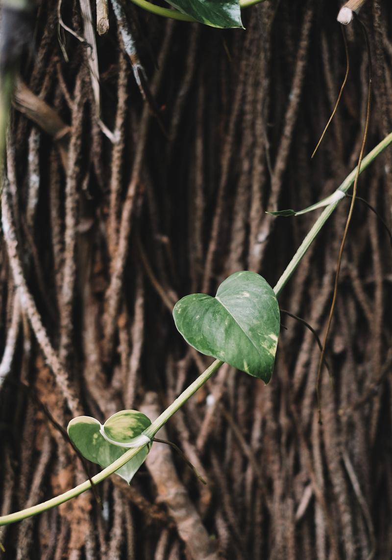IndeKerala-Dewalokam18-lechienataches