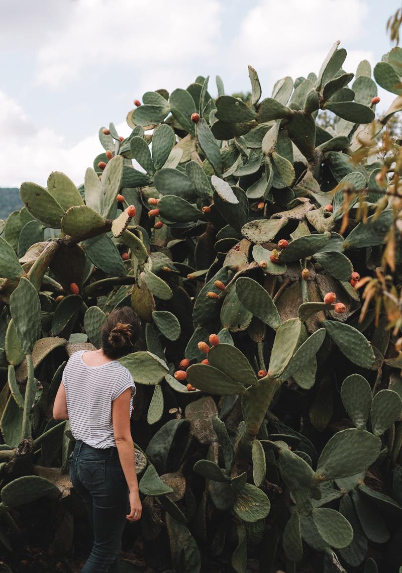 Pouilles-lechienataches-cactus